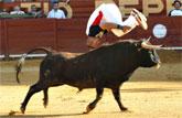 Por segunda vez en la historia Cehegín volverá a acoger el exitoso concurso de recortadores con toros