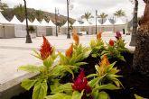 El Ayuntamiento adorna el puerto con 2.616 unidades florales para recibir la MedCup