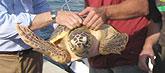 Liberan en su hábitat tres tortugas bobas tratadas en el Centro de Recuperación de la Fauna Silvestre de El Valle