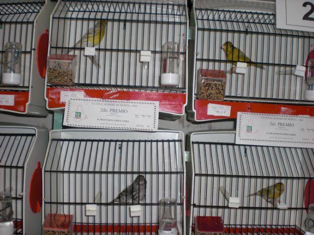 Más de 700 pájaros en el X Concurso de Exposición Ornitológica, Foto 2