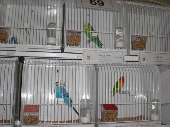 Más de 700 pájaros en el X Concurso de Exposición Ornitológica, Foto 5