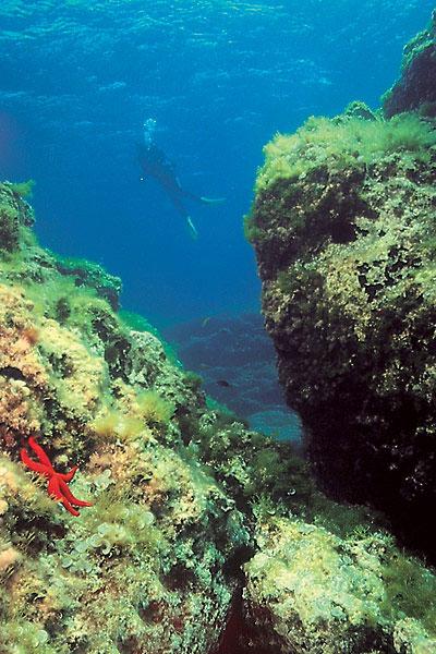 Mazarrón, escenario de la 'Limpieza de fondos marinos' - 1, Foto 1