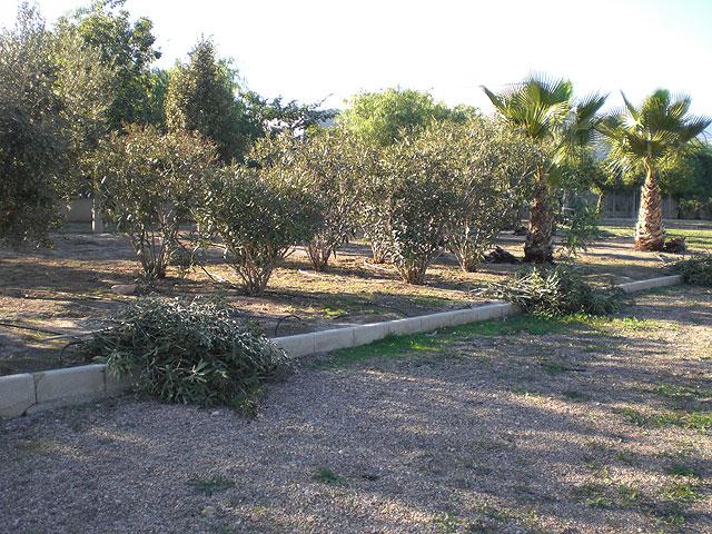 """Realizan un plan de choque de acondicionamiento y limpieza en los parques y jardines del Polígono Industrial """"El Saladar"""", Foto 1"""