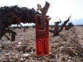 Agricultura invertirá más de un millón de euros para combatir la plaga de la polilla del racimo en viñedos con la técnica de confusión sexual