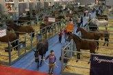 Mañana se conocerán a los mejores caballos del país