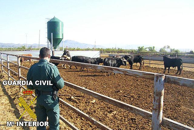 La Guardia Civil desmantela una explotación clandestina de reses bravas en Puerto Lumbreras - 1, Foto 1