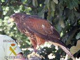 La Guardia Civil detiene a dos personas por el robo de un águila
