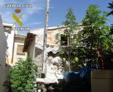 Desmantelado un punto de producción de marihuana en Ricote