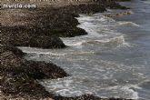 La concejalía de Medio Ambiente llevará su campaña sobre los arenales y la posidonia a las playas de La Manga durante el mes de agosto
