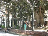 Limpieza del Ficus de Santo Domingo