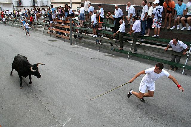 El encierro de vacas da el pistoletazo de salida a la Feria de San Zenón 2009 - 1, Foto 1