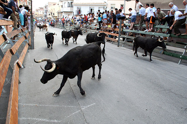 El encierro de vacas da el pistoletazo de salida a la Feria de San Zenón 2009 - 2, Foto 2
