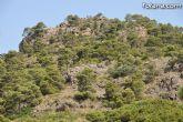La concejalía de Cultura y Turismo continúa trabajando en la elaboración del Plan de Dinamización Turística para el municipio de Totana