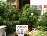 Agentes de la Policía Local de Totana proceden a la intervención e incautación de 15 kilogramos de marihuana en una vivienda de la localidad
