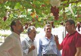 La Región de Murcia lidera la investigación en nuevas variedades de uva de mesa