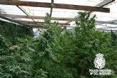 Desmantelada una plantación de Marihuana en Molina de Segura