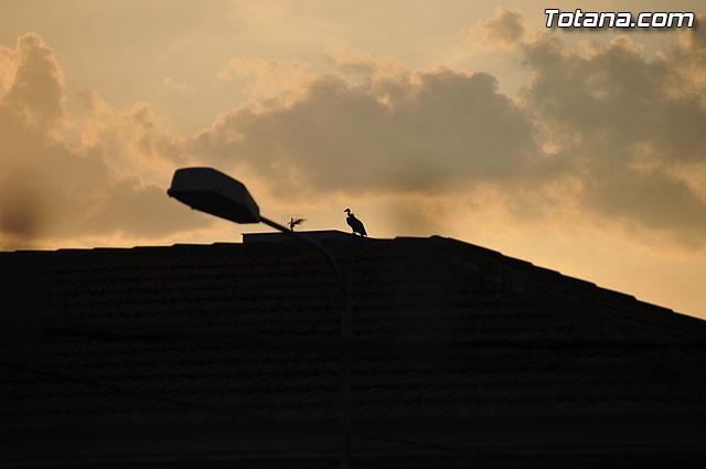 Un buitre en Totana - 24