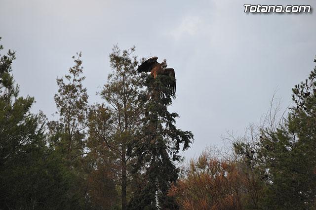 Un buitre en Totana - 37