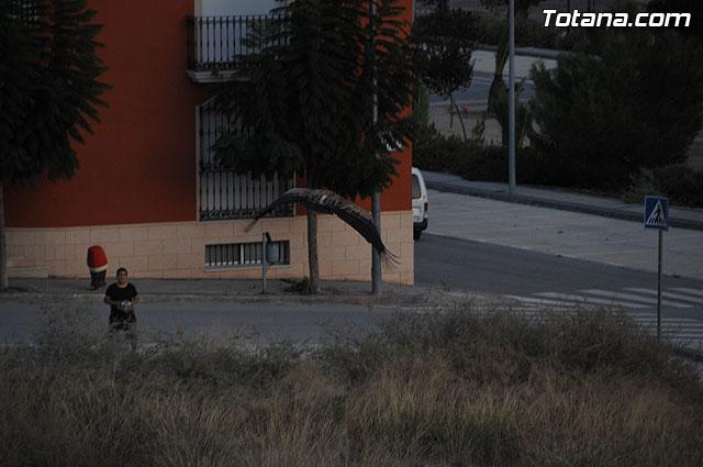 Un buitre en Totana - 70