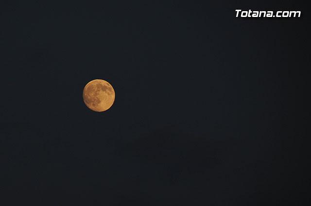 Un buitre en Totana - 76