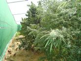 Desmantelado un nuevo punto de producción y distribución de marihuana