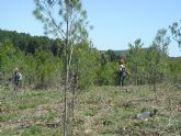La Consejer�a de Agricultura presenta un proyecto para desarrollar el uso de la biomasa forestal como fuente de energ�a renovable