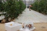 Agricultura liberó 250 millones de insectos para el control de plagas a través del programa 'Murcia Agricultura Limpia'