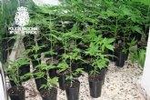Desmantelada una plantación de marihuana situada en el interior de una cueva