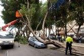 El viento tumba dos ficus en la Avenida de América en Cartagena