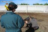 La Guardia Civil imputa al propietario de varios caballos por su abandono