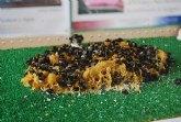 El ayuntamiento de Totana apoyará la creación de un museo de las abejas