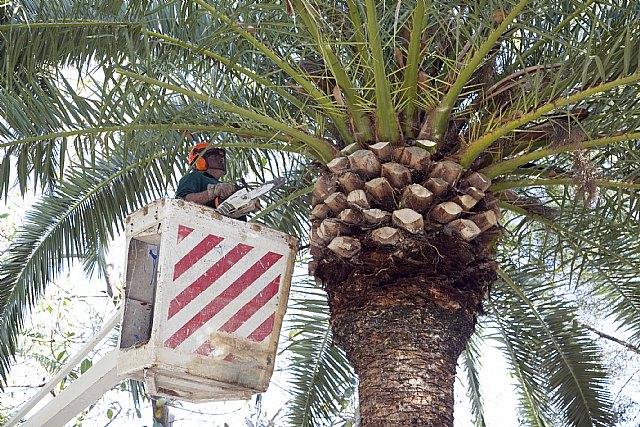 Mejora de las zonas verdes del municipio, Foto 1
