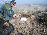 El Seprona de la Guardia Civil detiene a dos personas por delitos relativos a la protección de la fauna