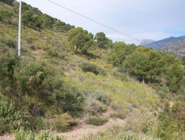 Un proyecto medioambiental prevendr� incendios forestales y aumentar�  la diversidad de la flora y la fauna en el paraje del Santuario de La Santa, Foto 1