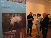 El Programa de Voluntariado en Ríos permite la recuperación de la Rambla Perea, en Mula