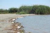Un grupo de voluntarios restaurará la playa de La Hita, en San Javier
