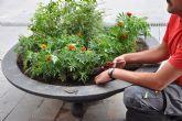 La Escuela Taller de Mula decora las jardineras de las calles comerciales de la ciudad con flores de temporada