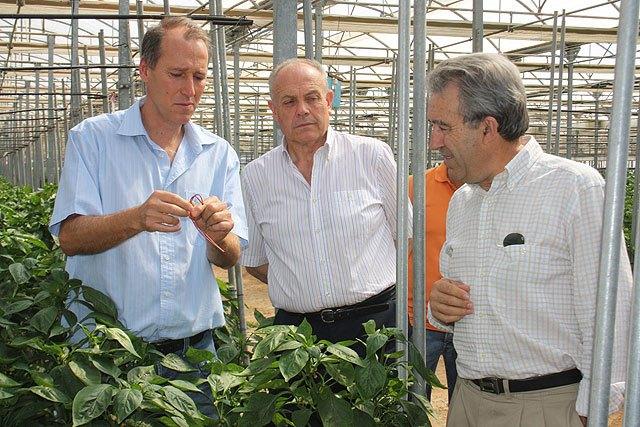 Cerdá destaca la colaboración directa entre agricultores y la Administración regional para buscar soluciones a los problemas del sector - 1, Foto 1