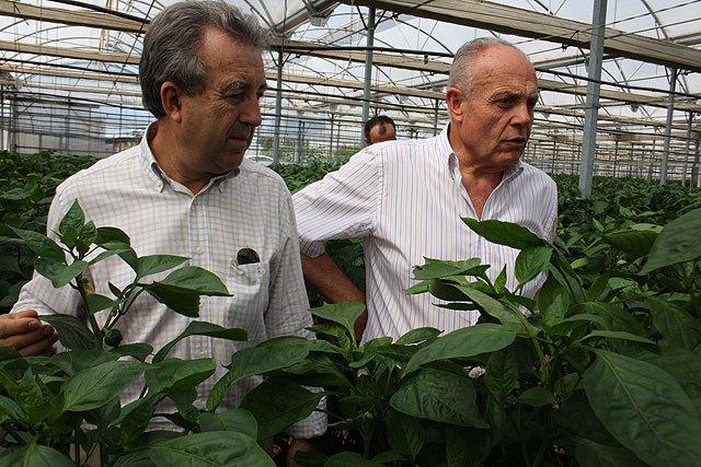 Cerdá destaca la colaboración directa entre agricultores y la Administración regional para buscar soluciones a los problemas del sector - 2, Foto 2