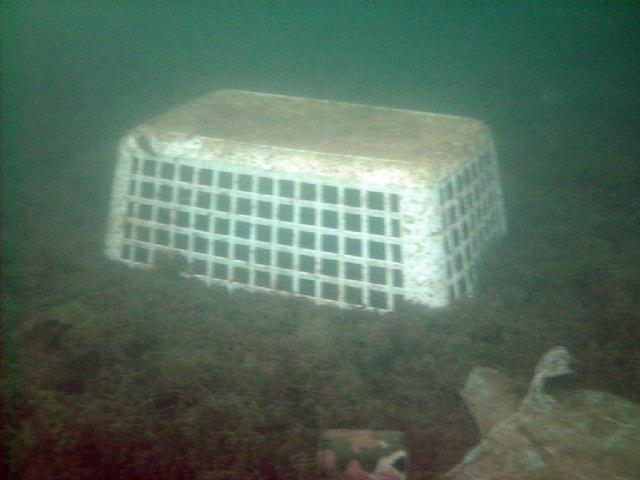 VIII Jornada de Limpieza de fondos marinos - 4, Foto 4