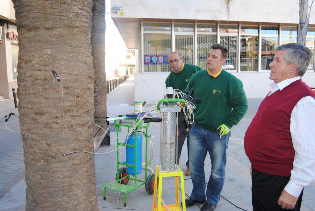 Parques y Jardines aplica  endoterapia contra el picudo rojo en quinientas palmeras del municipio - 1, Foto 1