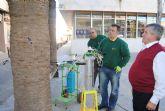 Parques y Jardines aplica  endoterapia contra el picudo rojo en quinientas palmeras del municipio
