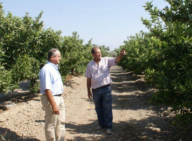 Comienza la campaña contra la Mosca de la Fruta en cítricos - 1, Foto 1
