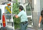 La Guardia Civil desmantela un punto de producción y distribución de droga en Fortuna