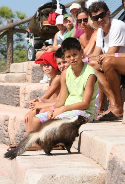 Terra Natura Murcia incorpora mamíferos a su espectáculo de rapaces - 3, Foto 3