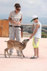 Terra Natura Murcia incorpora mamíferos a su espectáculo de rapaces