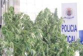 La Policía Local de Totana interviene en un control a vehículos diez plantas de marihuana