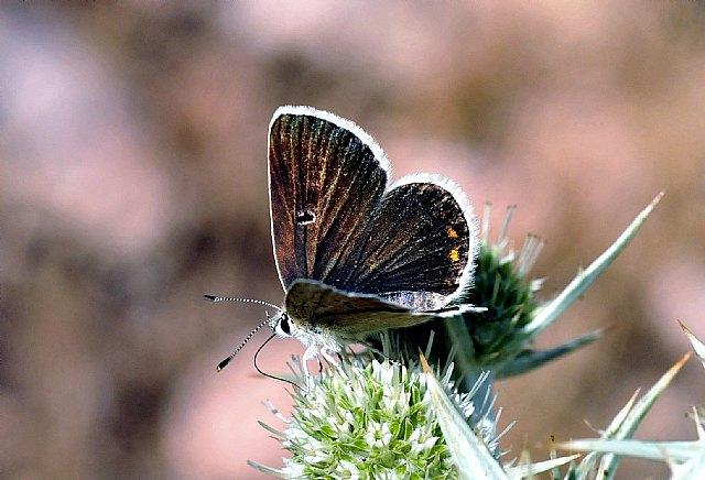 La Consejería de Agricultura sensibiliza sobre la importancia de las mariposas en Sierra Espuña, Foto 1