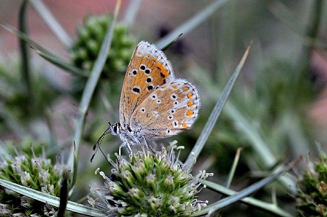 La Consejería de Agricultura sensibiliza sobre la importancia de las mariposas en Sierra Espuña, Foto 2
