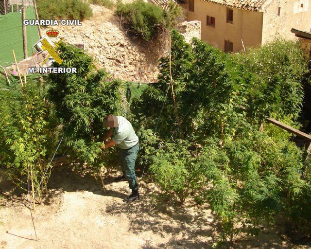 La Guardia Civil desmantela dos puntos de producción y distribución de marihuana en Archena y Pliego - 3, Foto 3